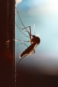 mosquito-exterminators-weston-florida